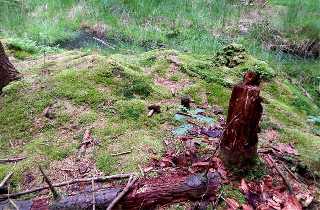 Vegetation am Nordkap